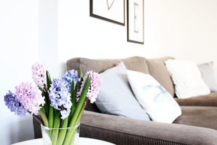 spring decoration with hyacinths