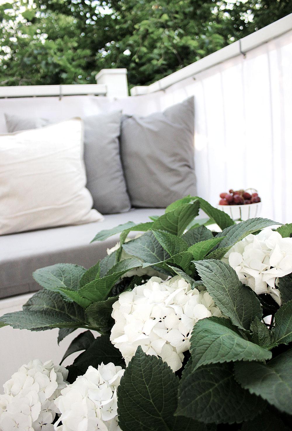 balkon-hortensien-1