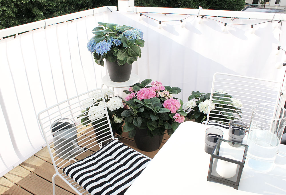 balkon-hortensien-windschutz-1