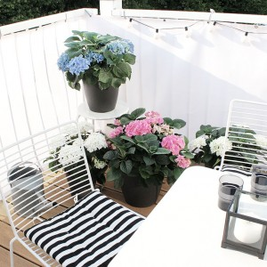 Mein neues blühendes Outdoor-Zimmer